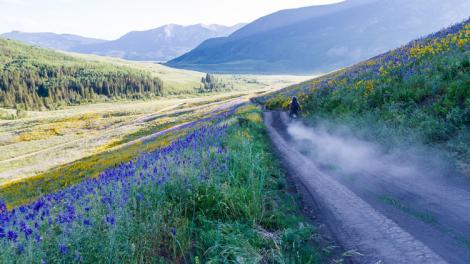 Flores coloridas junto a un camino de tierra en el Gunnison Valley cerca de Crested Butte