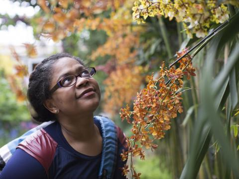 Admirando orquídeas en el Chicago Botanic Garden