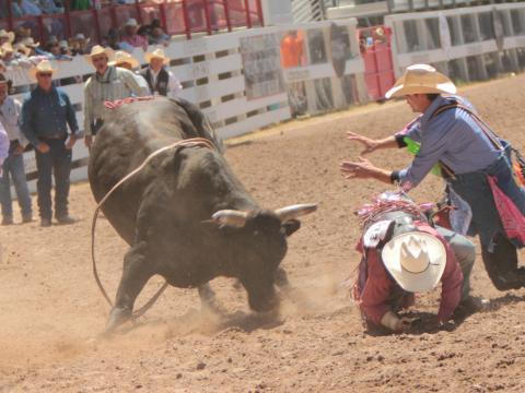 Monta de toros durante el Cheyenne Frontier Days