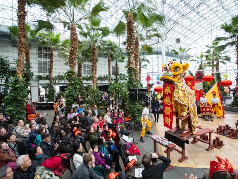 Celebración de Lantern Festival por el Año Nuevo Chino en Navy Pier