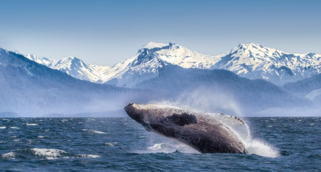 Aljaska Alaska8_Web72DPI_2